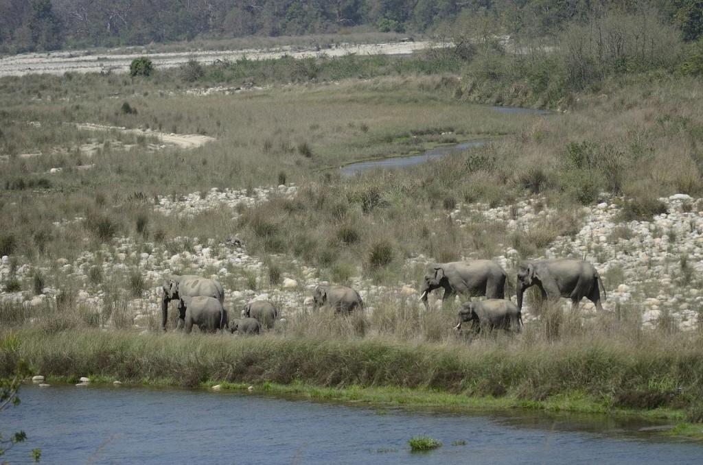 elephant herd__1423721152_182.71.168.172