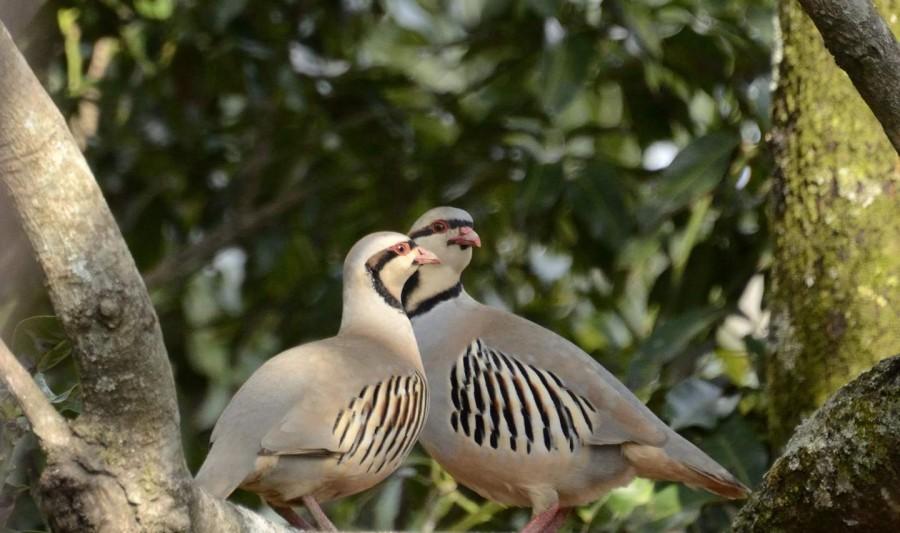 Birds around Tanhau