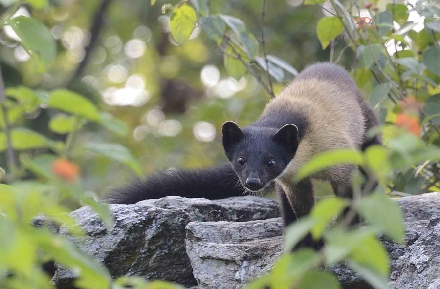 Wildlife around Tanhau